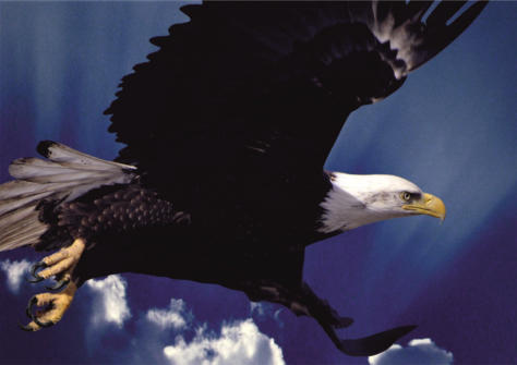 Open Satsang | Fly like an Eagle